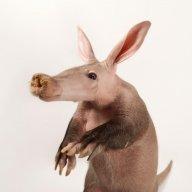 Aardvark787